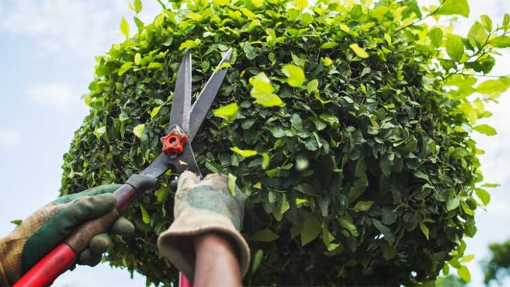Pruning-and-Trimming